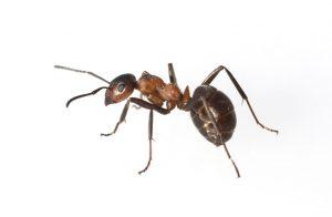 EWS Pest control private